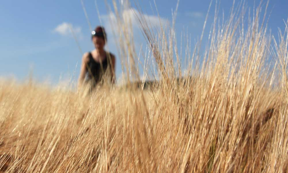 Gemma in the Barley