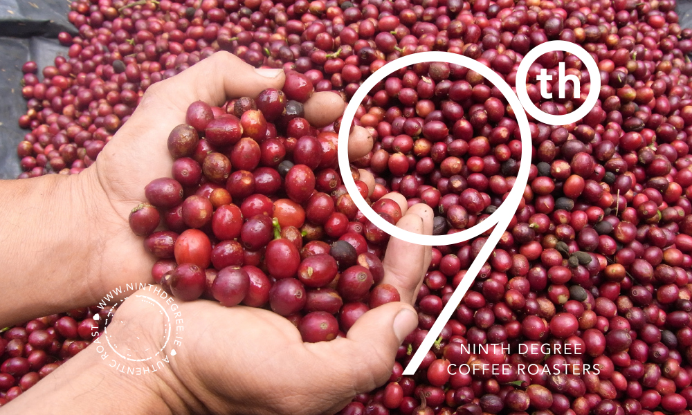 9th Degree coffee design 5