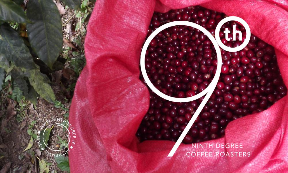 9th Degree coffee design 7